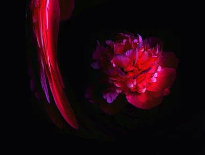 Photograph - Parrot And Paeony Illusion by Stephanie Grant