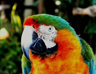 Photograph - Parrot  by Bruce Kessler