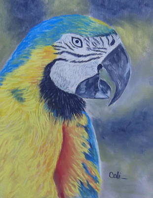 Pastel - Parrot by Calliope Thomas