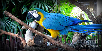 Photograph - Blue Yellow Macaw. Bird. Collection by Oksana Semenchenko