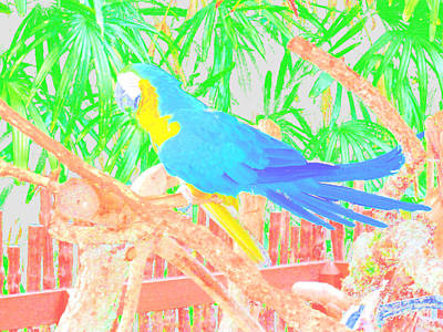 Photograph - Parrot. Colors by Oksana Semenchenko