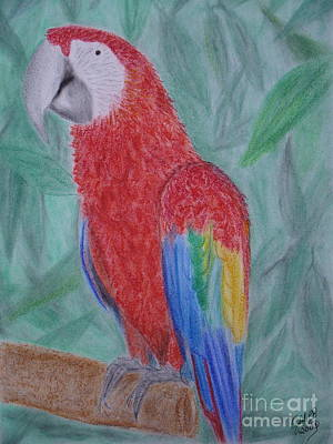 Wall Art - Painting - Parrot by Cybele Chaves