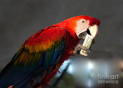 Art Print featuring the photograph Parrot Eating 1 Dollar Bank Note by Gunter Nezhoda