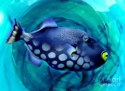 Photograph - Parrotfish by Janette Boyd