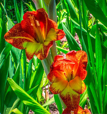 Print featuring the photograph Parrot Gladiolus by Rob Sellers