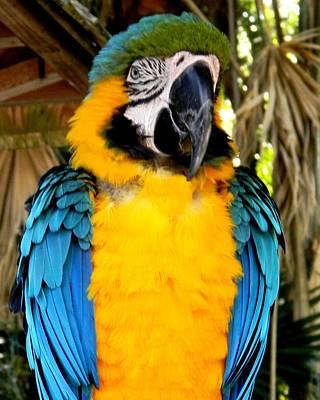 Photograph - Parrot II by Bruce Kessler
