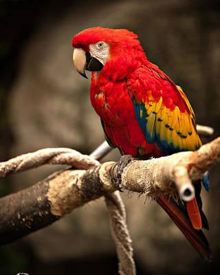 Parrot Art Print by Kerri Garrison