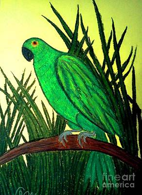 Pastel - Parrot by Neil Stuart Coffey