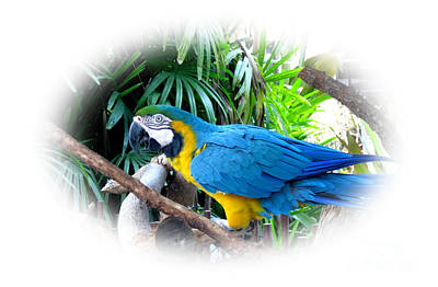 Photograph - Blue Yellow Macaw. Image Of Bird by Oksana Semenchenko