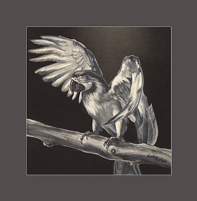 Macaw Drawing - Parrot On Branch by Lisa Nomikos