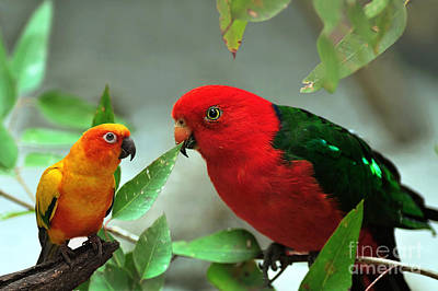 Photograph - Parrot Pals by Kaye Menner