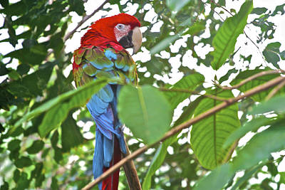 Photograph - Parrot by SC Heffner