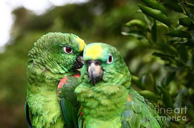 Secret Whispers Photograph - Parrot Whispers by James Brunker