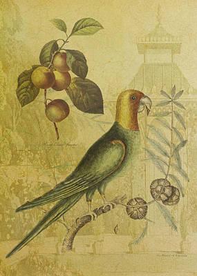 Parrot With Plums Art Print by Sarah Vernon