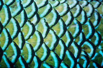 Designs In Nature Photograph - Parrotfish Scales by Jeffrey Rotman