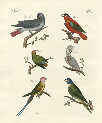 Cockatoo Drawing - Parrots Of The Old World by Splendid Art Prints