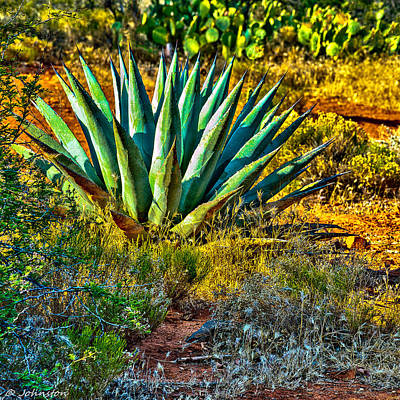 Photograph - Parry's Agave Sometimes Called Century Plant by Bob and Nadine Johnston