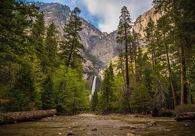 Yosemite Falls Photograph - Parting Trees by Kristopher Schoenleber