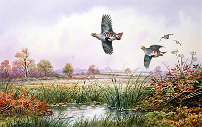 Wildlife Landscape Painting - Partridge In Flight by Carl Donner