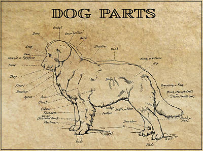Muzzle Digital Art - Parts Of A Dog 1919 by Daniel Hagerman