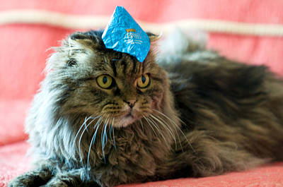 Photograph - Party Cat by Robert Culver