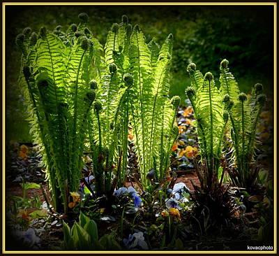 Photograph - Party Ferns by David Kovac
