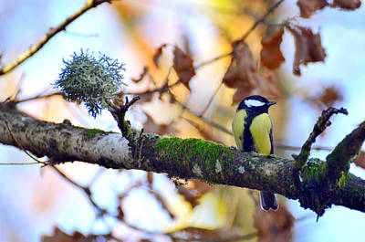 Bokhe Photograph - Parus Major by Tommytechno Sweden