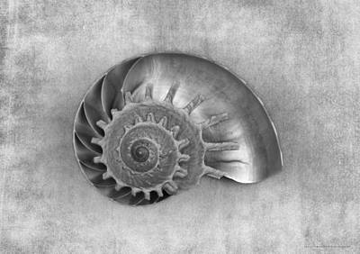 Seashell Photograph - Pas De Deux In Black And White by Chrystyne Novack