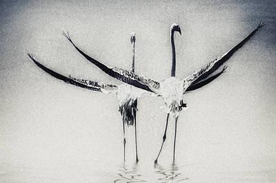 Birding Photograph - Pas De Deux by Piet Flour