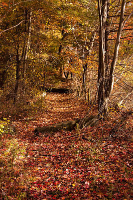 Photograph - Path On North Side Of Birch Pond by Jeff Folger