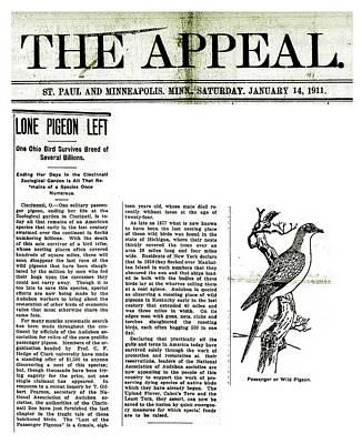 Passenger Pigeon Newspaper Article Art Print