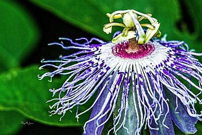 Photograph - Passion Flower - Passion Closeup by Barry Jones