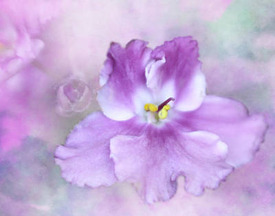 Violet Bloom Photograph - Passion by David and Carol Kelly