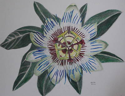 Passion Flower Vine Painting - Passion Flower by Gitta Brewster