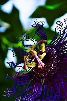Airplane Paintings - Passion Flower II by Ursa Davis