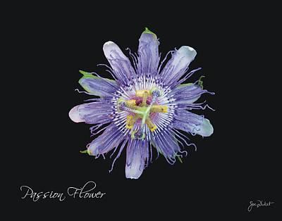 Photograph - Passion Flower by Joe Duket