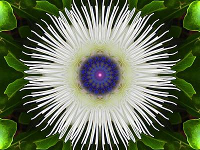 Digital Art - Passion Flower Portal Mandala by Diane Lynn Hix