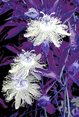 Photograph - Passion Flower by Robert Camp