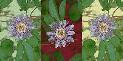 Passion Flower Triptych Art Print by Tom Wurl