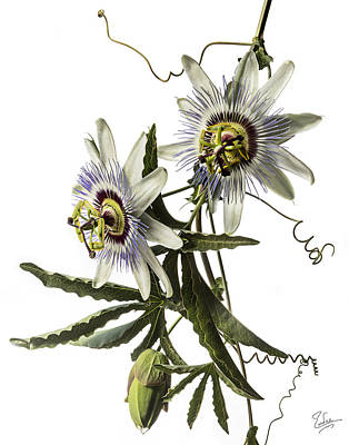 Photograph - Passion Flowers by Endre Balogh