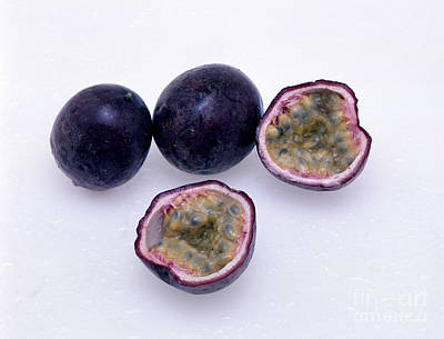 Passion Fruit Photograph - Passion Fruit by G. Buttner/Okapia