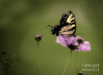 Photograph - Passion Of The Nectar by Cris Hayes
