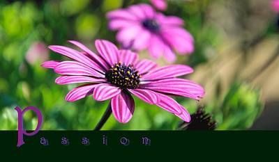 Daisy Photograph - Passion by WDM Gallery