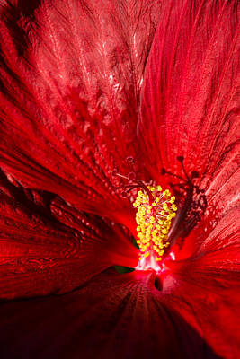 Photograph - Passionate Ruby Red Silk by Georgia Mizuleva