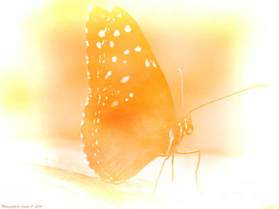 Photograph - Pastel Butterfly by Gena Weiser