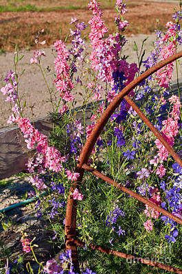 Photograph - Pastel Colored Larkspur Flowers With Rusty Wagon Wheel Art Prints by Valerie Garner