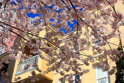 Photograph - Pastel Colours Of Spring In Vancouver by Gerry Bates
