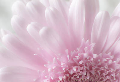 Photograph - Pastel Daisy by Dale Kincaid