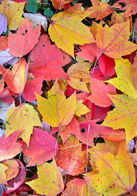 Photograph - Pastel Fall Colors by Ray Mathis