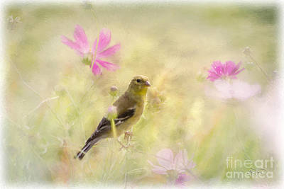 Pastel Finch In Oil Art Print